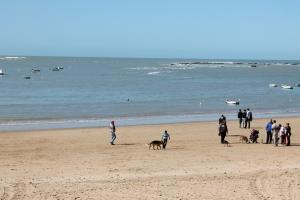Una mañana de domingo invernal en la playa de la Caleta los perros pasean a sus anchas. / Diego Pereira